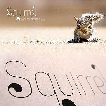 常用设计师商业字体Squirrel灵动气质英文字体