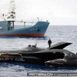 日船撞沉反捕鲸艇(6P)