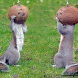 这两个松鼠看起来很像是宇航员啊!