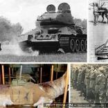 十大最疯狂的战争武器有哪些?