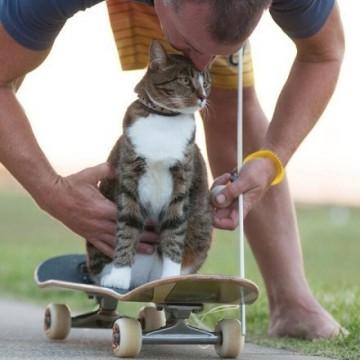 喵星人玩滑板,超帅!!